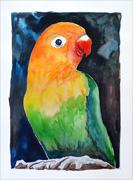 Parrot Aquarelle
