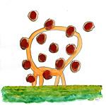 Girafe sans tête